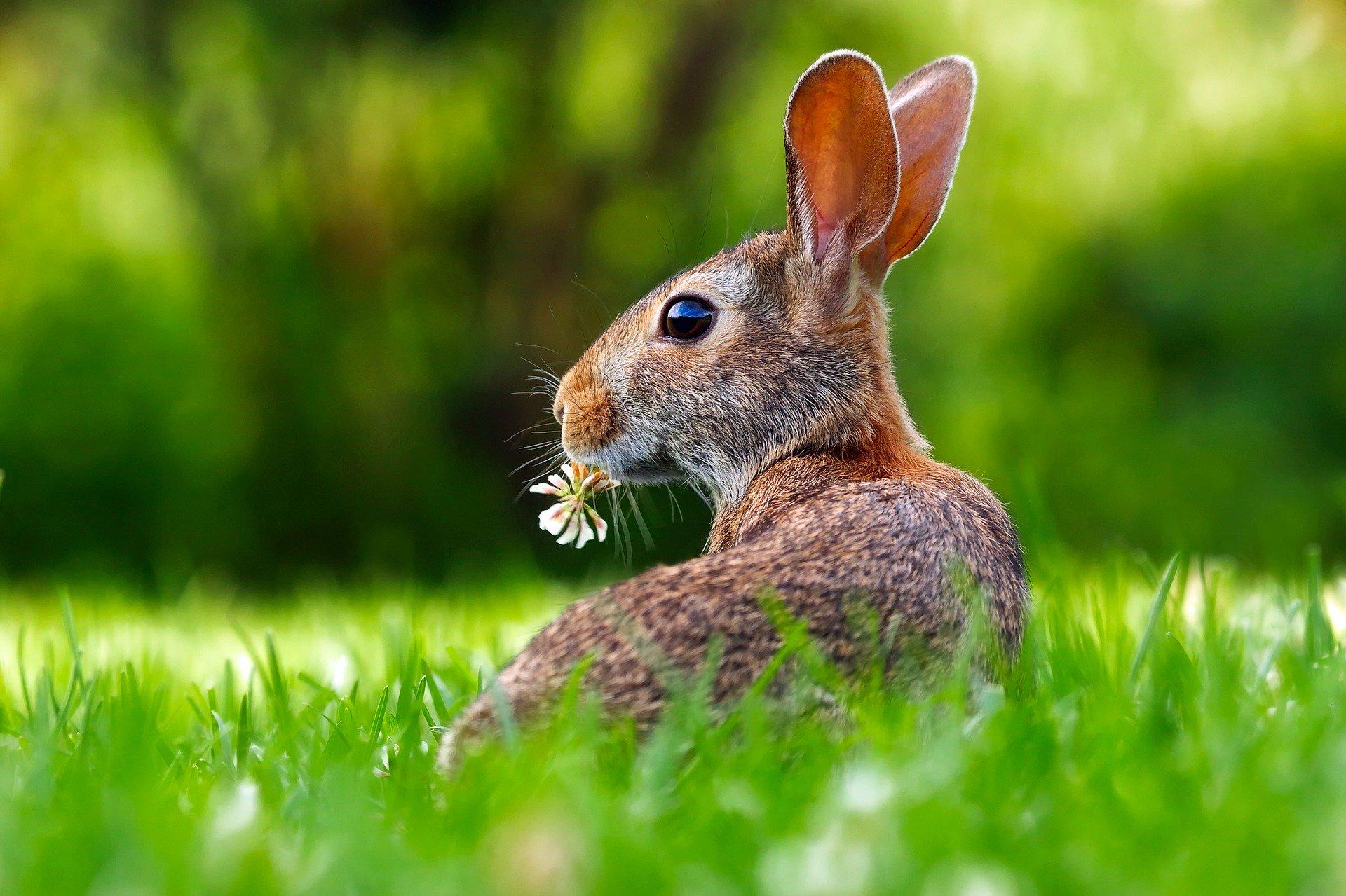 animales exoticos conejos